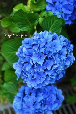Kawaguchiko1_3_1